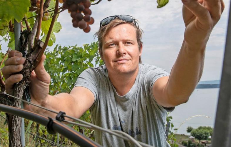 Andreas Krebs im Weinberg mit seinen Trauben