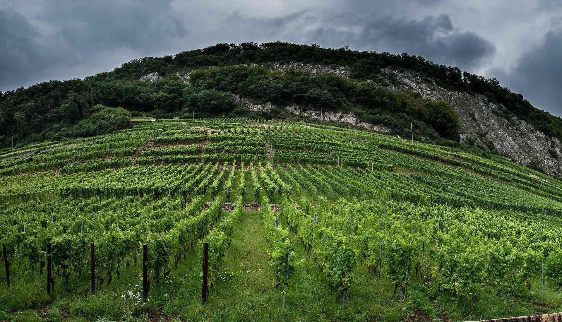 Die Lage Vogelsang, aus welcher der gleichnamige Pinot Noir von Gromann & Söhne stammt